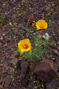 AZ-2010-051: Tohono O'Odham Indian Reservation, Pinal County, AZ, USA