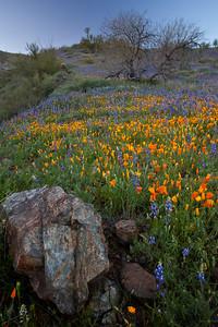 AZ-2010-079: Peachville Mountain, Pinal County, AZ, USA