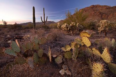 AZ-2010-138: Tucson, Pima County, AZ, USA
