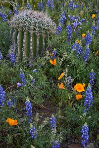 AZ-2010-074: Peachville Mountain, Pinal County, AZ, USA