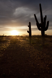 AZ-2010-060: Tohono O'Odham Indian Reservation, Pinal County, AZ, USA