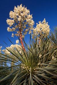 TX-2011-005: El Paso, El Paso County, TX, USA