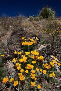 TX-2010-006: El Paso, El Paso County, TX, USA