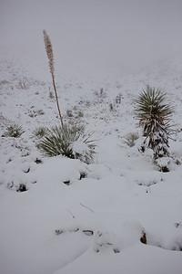 TX-2009-192: El Paso, El Paso County, TX, USA