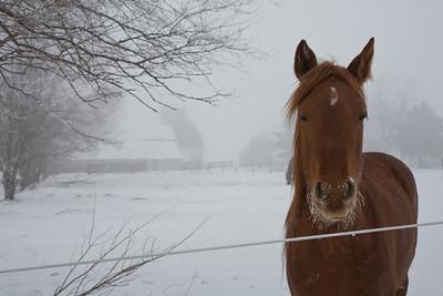 IL-2007-063: , Logan County, IL, USA