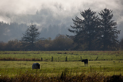 OR-2009-117: , Tillamook County, OR, USA