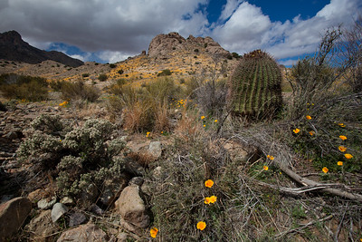 NM-2010-098: Florida Mountains, Luna County, NM, USA