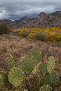 NM-2012-294: Gila River, Grant County, NM, USA