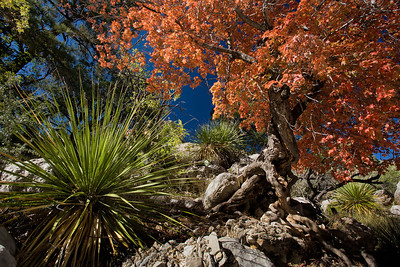 TX-2008-053: Guadalupe Mountains NP, Culberson County, TX, USA