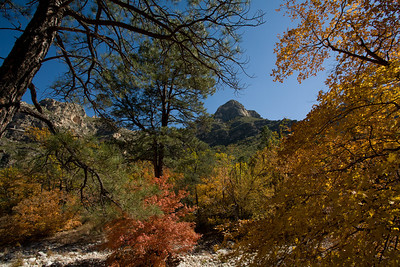 TX-2008-083: Guadalupe Mountains NP, Culberson County, TX, USA