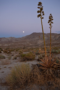CA-2010-004: Anza Borrego Desert State Park, San Diego County, CA, USA