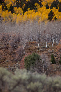UT-2010-007: Spanish Fork Canyon, Utah County, UT, USA