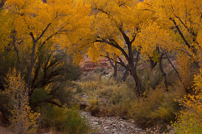 UT-2010-009: , San Juan County, UT, USA