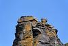 Cruise #68.<br /> <br /> A sea bird (gull?) atop Branaunmore sea stack.<br /> <br /> Cliffs of Moher, County Clare, Ireland.