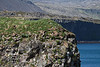 Prime nesting habitat for gulls.<br /> <br /> Arnarstapi, Snæfellsnes Peninsula.<br /> June 16, 2010