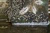 Mayflies or midges