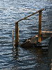 April 17, 2007<br /> This was the first year, for many years, when lake levels were high enough to come through some breaches in the breakwater and flood the area behind it.<br /> <br /> Here water can be seen to have risen over the bottom step of the stairs leading down to the dock.