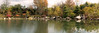 Panoramic view from two photomerges - Lake in Japanese Garden