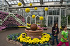 D289-2012 This room of the Conservatory is typically given over to special displays which are often seasonal in character.  This year the theme seems to be chrysanthemums, apples, pumpkins, and ornamental kale or cabbage.  The color scheme in this room was white, purple, and yellow.<br /> <br /> Being, now, the most popular tourist destination in Michigan, the Gardens can be overrun by bus loads of school children and people from retirement homes.  Both were well represented the day we visited.  <br /> .<br /> Frederik Meijer Gardens and Sculpture Park, Grand Rapids, Michigan<br /> October 16, 2012