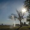 14 08-11 Buena Vista 1533