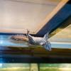 15 02-06 Calm Zoo 662
