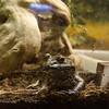 15 02-06 Calm Zoo 659