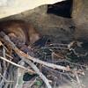 15 02-06 Calm Zoo 677