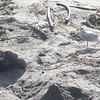 21 01-01 Elephant seals 9350