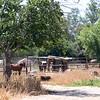 17 05-21 horses 5480