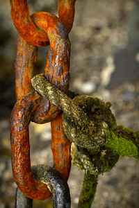 Rusty chains and mossy ropes hang beneath the pier at Bar Harbor.