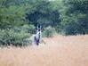 Eland Polokwane _14-03-03__O6B0722