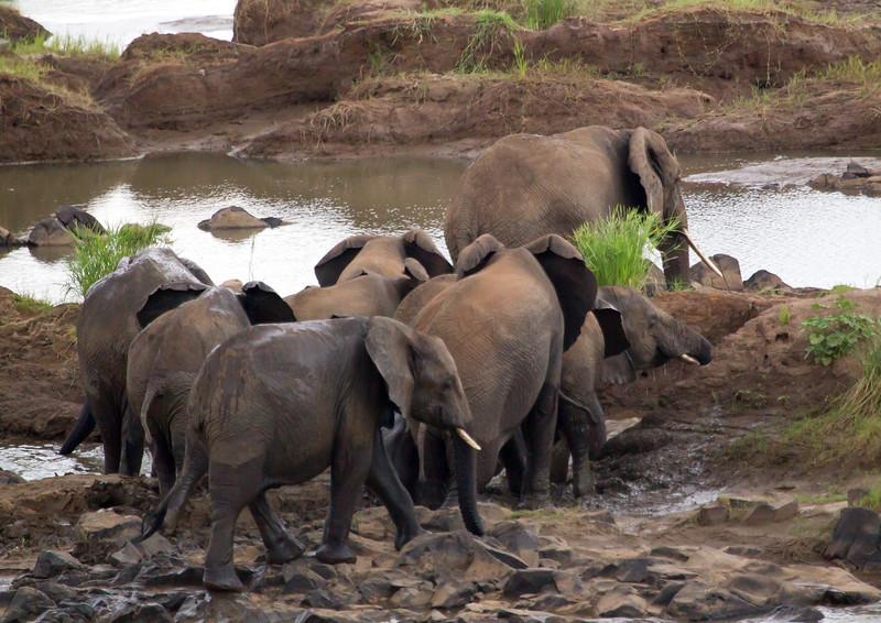 Elephants Kruger_14-03-02__O6B0441