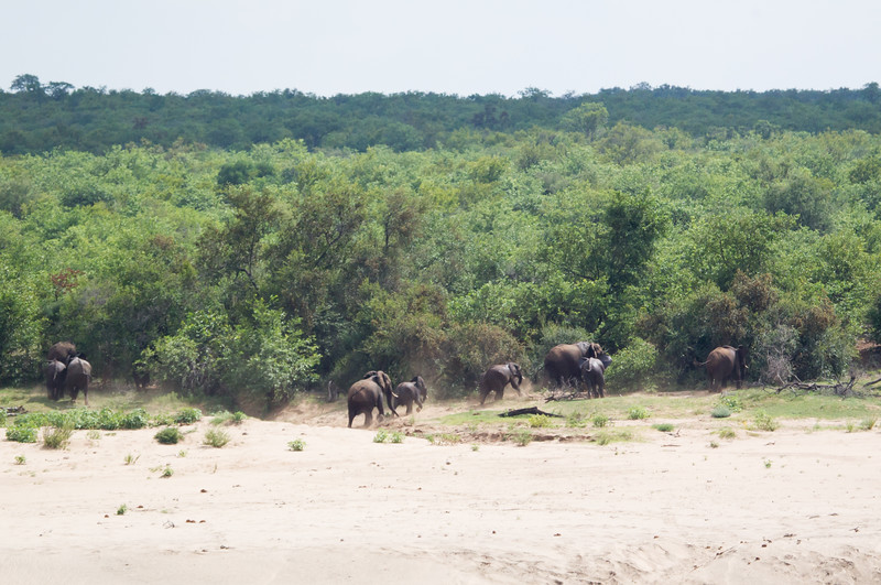 Elephants Kruger_14-03-02__O6B0517