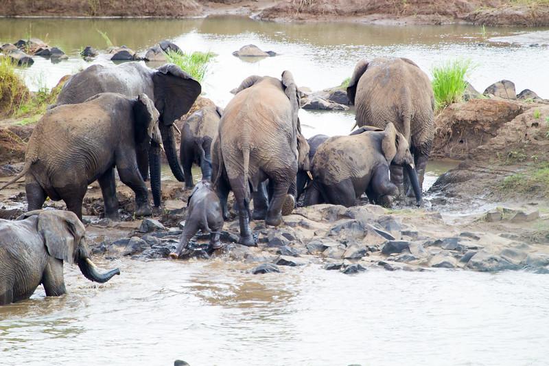 Elephants Kruger_14-03-02__O6B0436