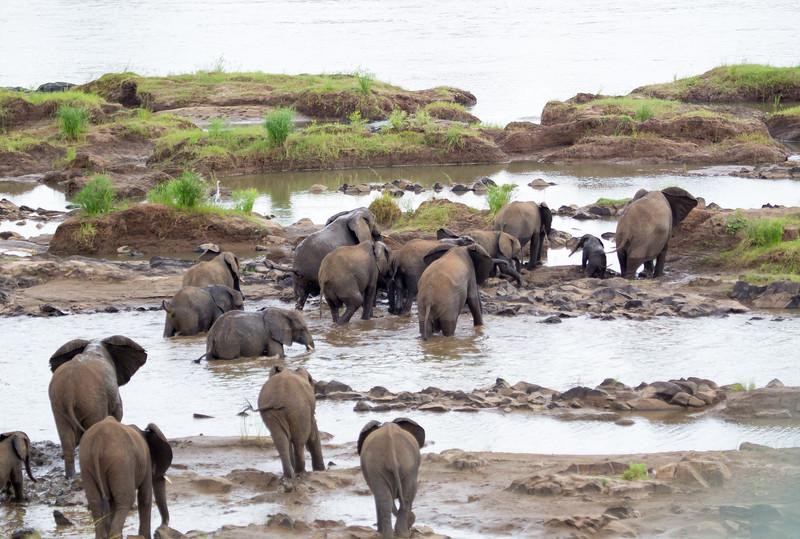 Elephants Kruger_14-03-02__O6B0432