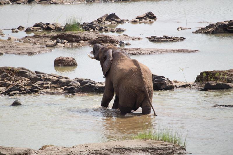 Elephants Kruger_14-03-02__O6B0521