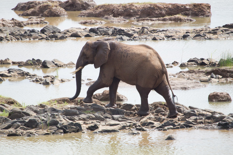 Elephants Kruger_14-03-02__O6B0525