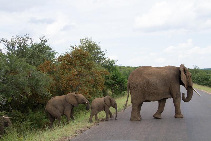 Elephants Kruger_14-03-01_IMG_6137