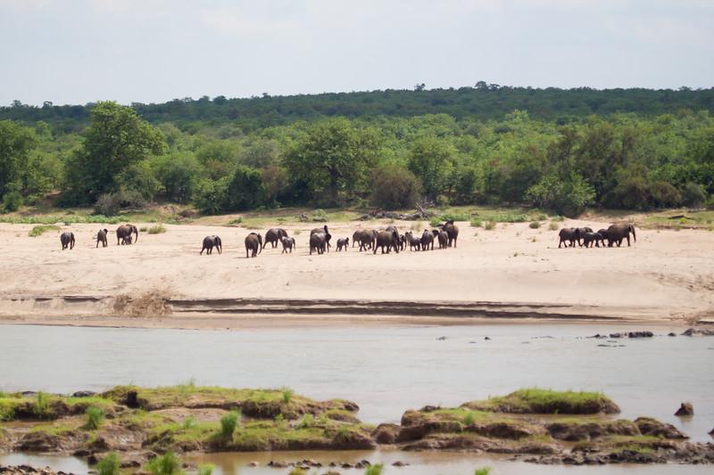 Elephants Kruger_14-03-02__O6B0515