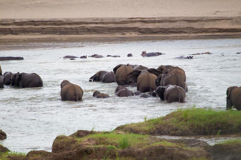 Elephants Kruger_14-03-02__O6B0469