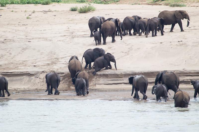 Elephants Kruger_14-03-02__O6B0500