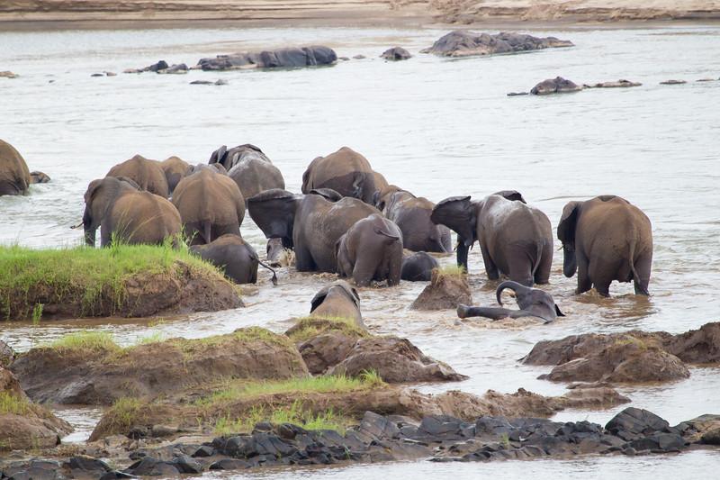Elephants Kruger_14-03-02__O6B0464