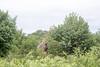 Girafe Chobe_14-03-08__O6B1622