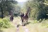 Girafe Kirkman_14-03-16__O6B2357