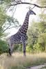 Girafe Kirkman_14-03-15__O6B2265