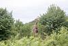Girafe Chobe_14-03-08__O6B1624
