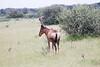 Hartebeast Khama_14-03-13__O6B1964