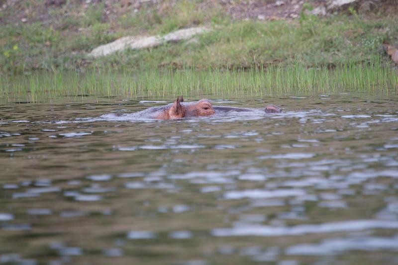 Hippo Chobe_14-03-08__O6B1260