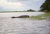 Hippo Chobe_14-03-08__O6B1255