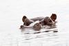 Hippo Chobe_14-03-08__O6B1289